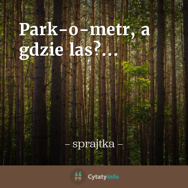Park-o-metr, a gdzie las?...