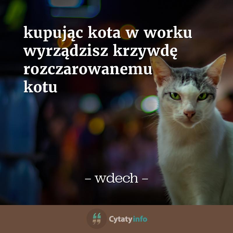 <em>kupując kota w worku wyrządzisz krzywdę rozczarowanemu kotu</em>