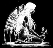 Angel.lew